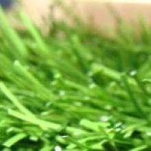 Искусственная трава для футбола - ADVANTAGE 55