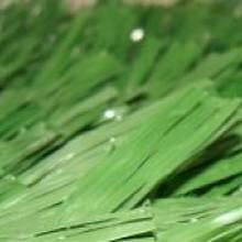 Искусственная трава для футбола - PROEXTRA - FIFA 1